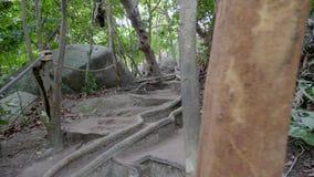 Via nella giungla stock footage