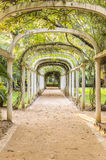 Via pública larga e urbanizada em Rio de janeiro Botanical Garden, Brasil imagens de stock royalty free