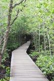 Via per studiare l'ecologia delle mangrovie immagine stock libera da diritti