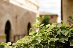 Via pubblica della pianta in Spello Immagini Stock Libere da Diritti