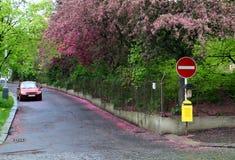 Via residenziale in primavera Immagine Stock