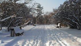 Via saltata della neve nel parco archivi video