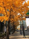 Via a Seoul Fotografie Stock Libere da Diritti