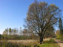 Via sola di autunno Fotografia Stock Libera da Diritti