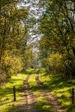 Via in una foresta in autunno con gli alberi con le foglie gialle Fotografia Stock