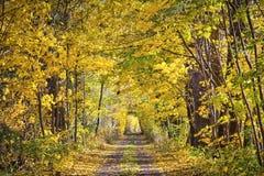 Via variopinta in autunno Immagini Stock Libere da Diritti