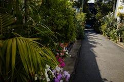 Via verde del centro urbano con le piante ed i fiori Immagine Stock Libera da Diritti