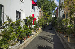 Via verde del centro urbano con le piante ed i fiori Fotografia Stock Libera da Diritti