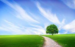 Via vicino all'albero nel campo verde Fotografie Stock Libere da Diritti