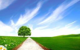Via vicino all'albero nel campo verde Immagine Stock Libera da Diritti