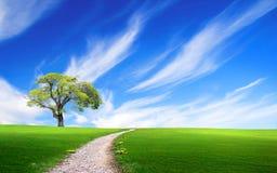 Via vicino all'albero nel campo verde Fotografia Stock