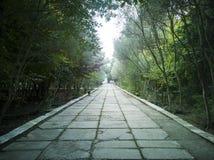 Via vuota al giardino piacevole e comodo alla mattina fotografie stock