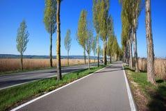 Via vuota allineata con gli alberi con i cieli blu Immagine Stock