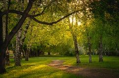 Via vuota lungo i vecchi alberi in un parco della città nella sera Immagini Stock Libere da Diritti