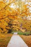 Via vuota nel parco di autunno fotografie stock libere da diritti