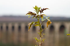Viaduc de Harrogate Photos libres de droits