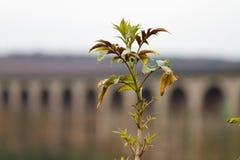 Viaducto de Harrogate Fotos de archivo libres de regalías