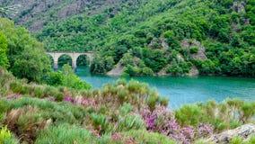 Viadukt och flod Royaltyfria Bilder
