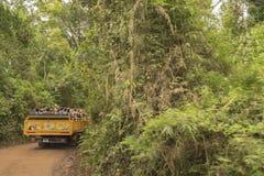 Viagem à selva no parque de Iguazu Imagem de Stock