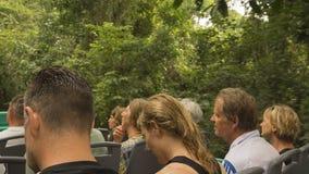 Viagem à selva no parque de Iguazu Foto de Stock Royalty Free