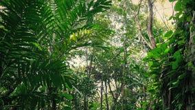 Viagem após a cara coberto de vegetação da rocha na selva