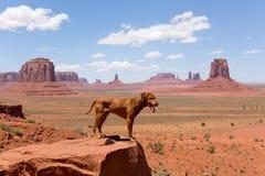 Viagem com o cão Fotos de Stock Royalty Free