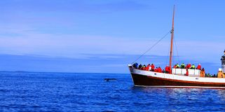 Viagem de observação da baleia, em julho de 2017, Islândia imagem de stock royalty free