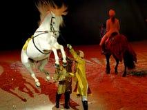 Viagem grande 2009 de Apassionata em Florença Imagens de Stock Royalty Free