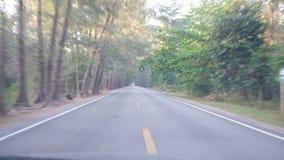 Viagem longa ao destino com cerco da floresta do pinho Viagem pelo carro filme