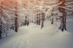 Viagem na floresta da montanha do inverno Fotos de Stock Royalty Free