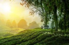 Viagem nas montanhas verdes com fora do veículo de estrada Imagem de Stock Royalty Free