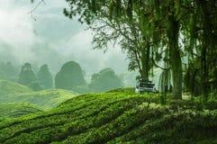 Viagem nas montanhas verdes com fora do veículo de estrada Imagem de Stock