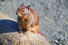 Viagem por estrada litoral da costa de Califórnia do esquilo Imagens de Stock Royalty Free