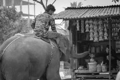 Viagens animais Fotos de Stock