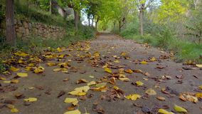 Viaggiando al livello del suolo che avanza su una strada di autunno in pieno delle foglie sugli alberi a terra e gialli, arancio  archivi video