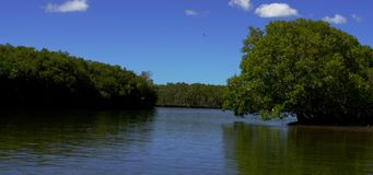 Viaggiando su un fiume stock footage