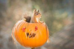 Viaggiatore di Halloween Fotografia Stock