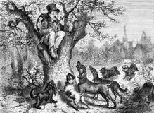 Viaggiatore in pericolo da un gruppo del cane immagine stock
