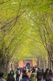 Viaggiatore in tempio Pechino, porcellana della lama Fotografia Stock Libera da Diritti