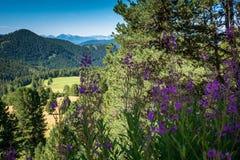 Viaggiatori che camminano su una traccia in montagne delle dolomia, Tyrolo del sud, Italia Immagini Stock
