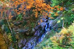 Viaggio alle cascate di Mendelikh, foresta profonda, cascata fotografie stock