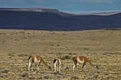 Viaggio in Argentina Fotografia Stock