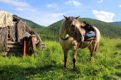 Viaggio attraverso la natura selvaggia del Altai fotografia stock libera da diritti
