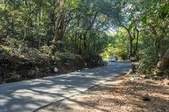 Viaggio, azionamento lungo e sentiero forestale Fotografie Stock