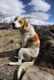 Viaggio con il cane in Georgia Fotografie Stock