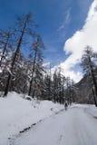 Viaggio del furetto di Val Immagini Stock Libere da Diritti