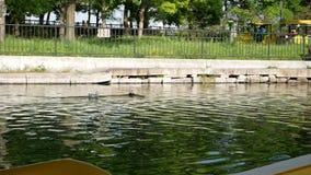 Viaggio del lago con la barca dorata archivi video