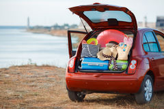 Viaggio dell'automobile di famiglia Immagine Stock Libera da Diritti