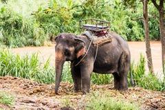 Viaggio dell'elefante Fotografia Stock
