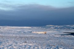 Viaggio dell'Islanda Fotografia Stock Libera da Diritti